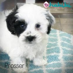 yasmine-prosser8