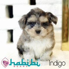 l-indigo1.jpg