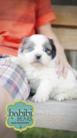 Blue Confetti Parti Color- Blue Eyes