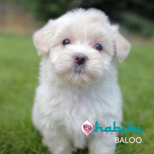 BALOO5