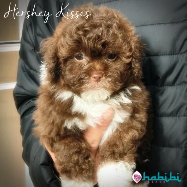Hershey-Boy-I'm Staying Home!