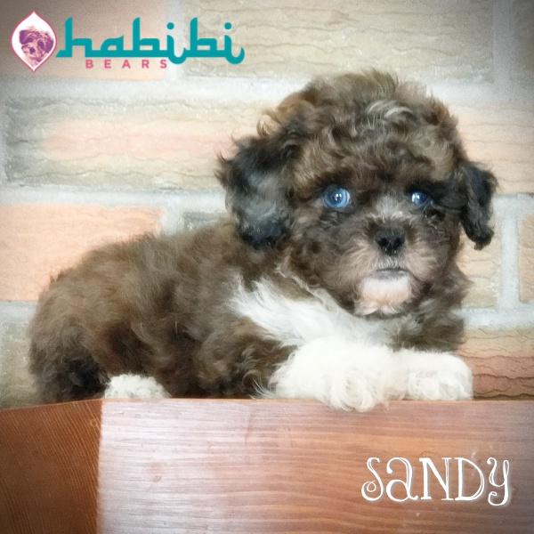 Sandy-Boy