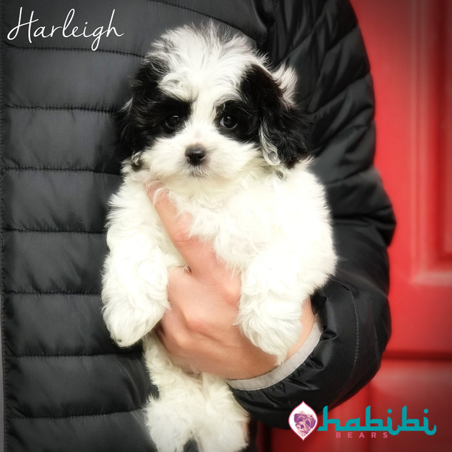 Harleigh-Girl-I'm Adopted