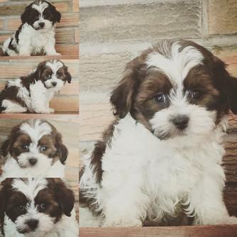 Puppy Selection has Begun