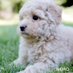 NEMO5