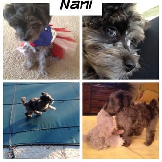 Meet Nani: Blue Confetti Habibi Bear