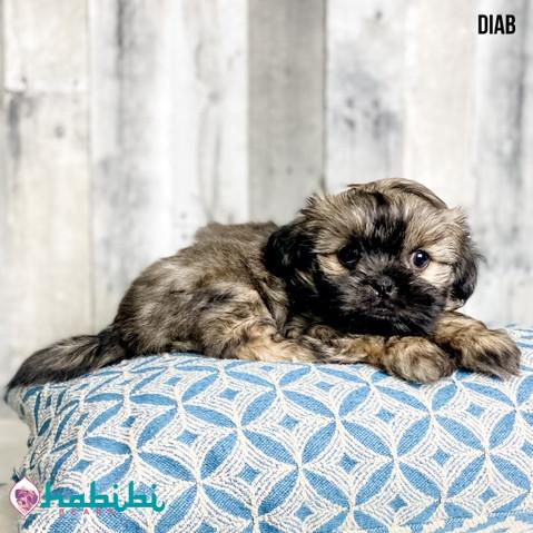 Puppy & Upcoming Litter Updates