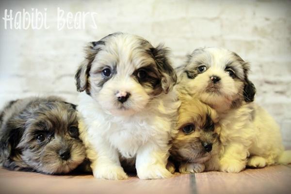 Jemima, Diggory, Cecily & Thomasina