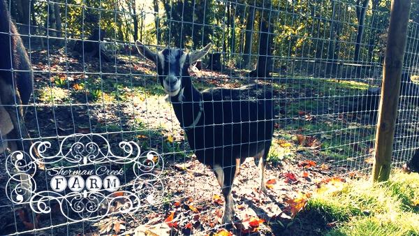 Sherman Creek Farm llc
