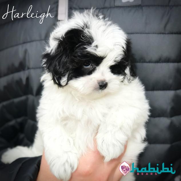 Harleigh- Girl- I'm Adopted