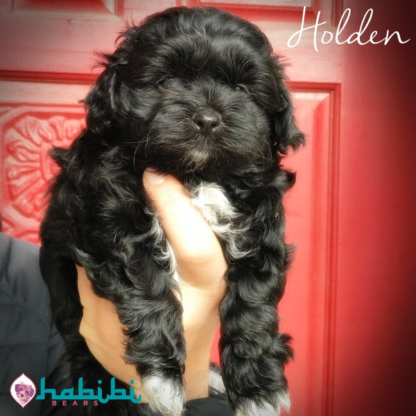 Holden-Boy-I'm Adopted!