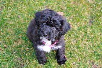 Meet Poppy: Black & White Tuxedo Habibi Bear