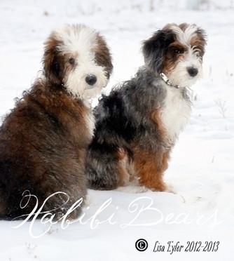 Previous Standard Confetti Puppies
