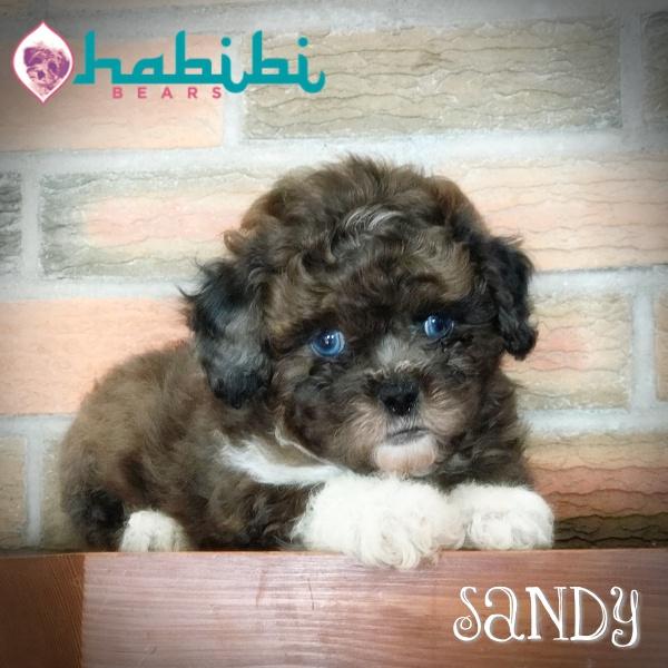 Sandy- Boy