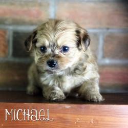 Michael - Boy- Sable Confetti