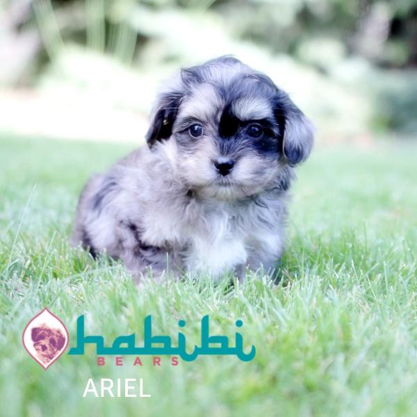 ARIEL22