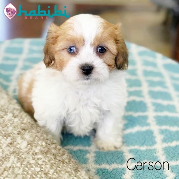 yasmine-carson5