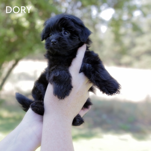 DORY2