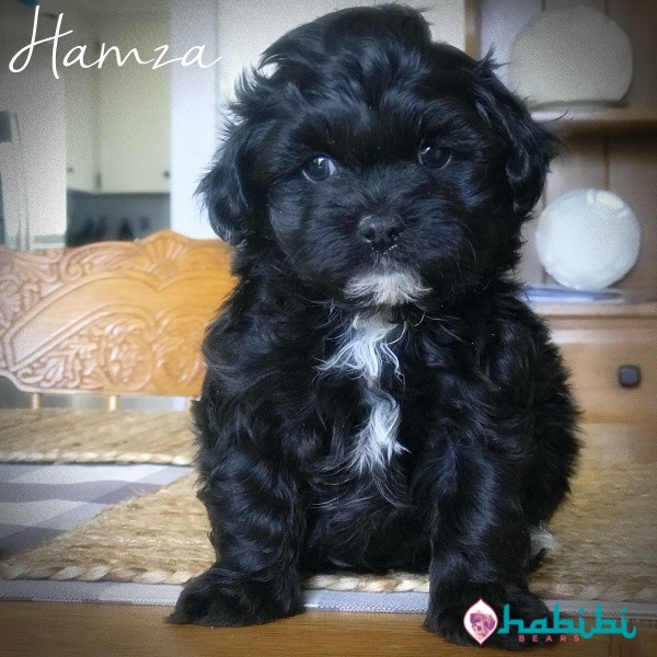 Hamza-Boy-I'm Adopted