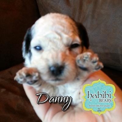 Danny-Boy-1800