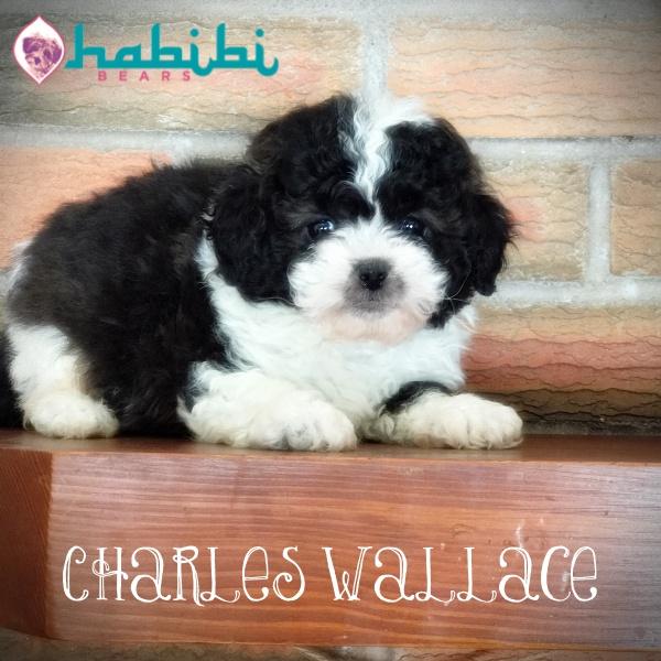 Charles Wallace-boy