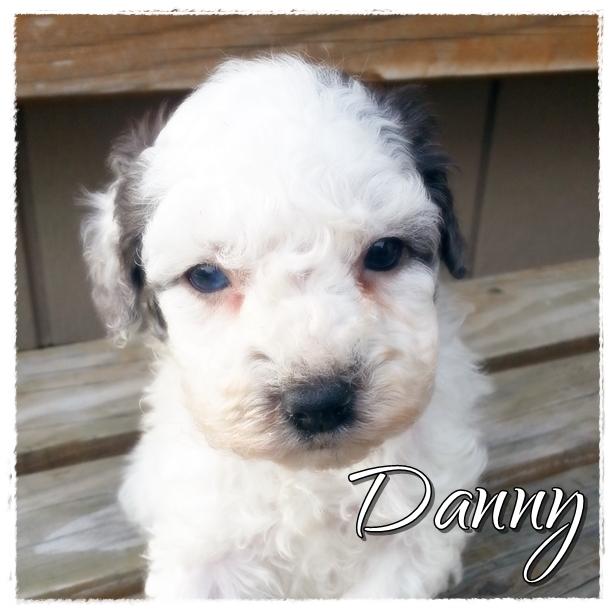 Danny--1800