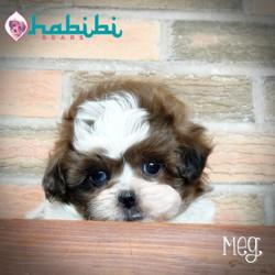 Meg - Girl