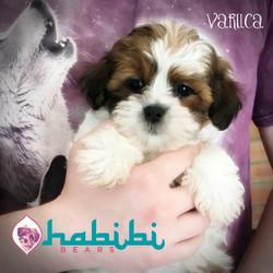 Varuca - Girl - $2100