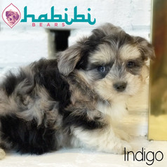 l-indigo2.jpg