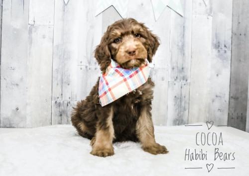 Cocoa - Boy -  I'm Available!