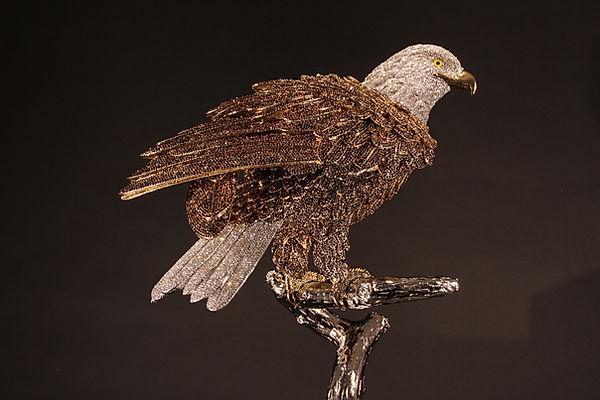 Bald Eagle 01.jpg