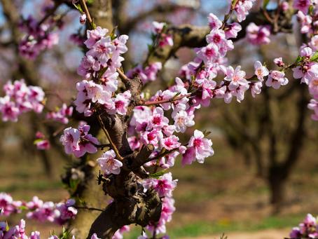 ¡Feliz equinoccio de primavera!