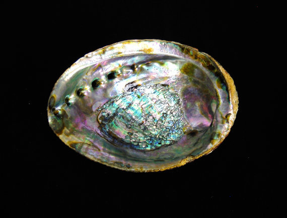 Abalone Smudge Pot