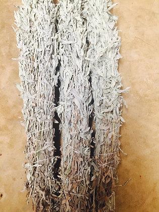 Bundles of Sage