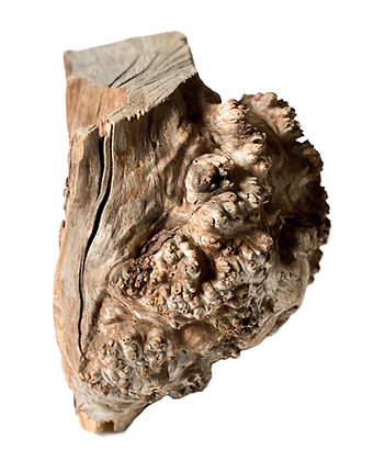 ONE OF A KIND BURL WOOD OBJECT #2