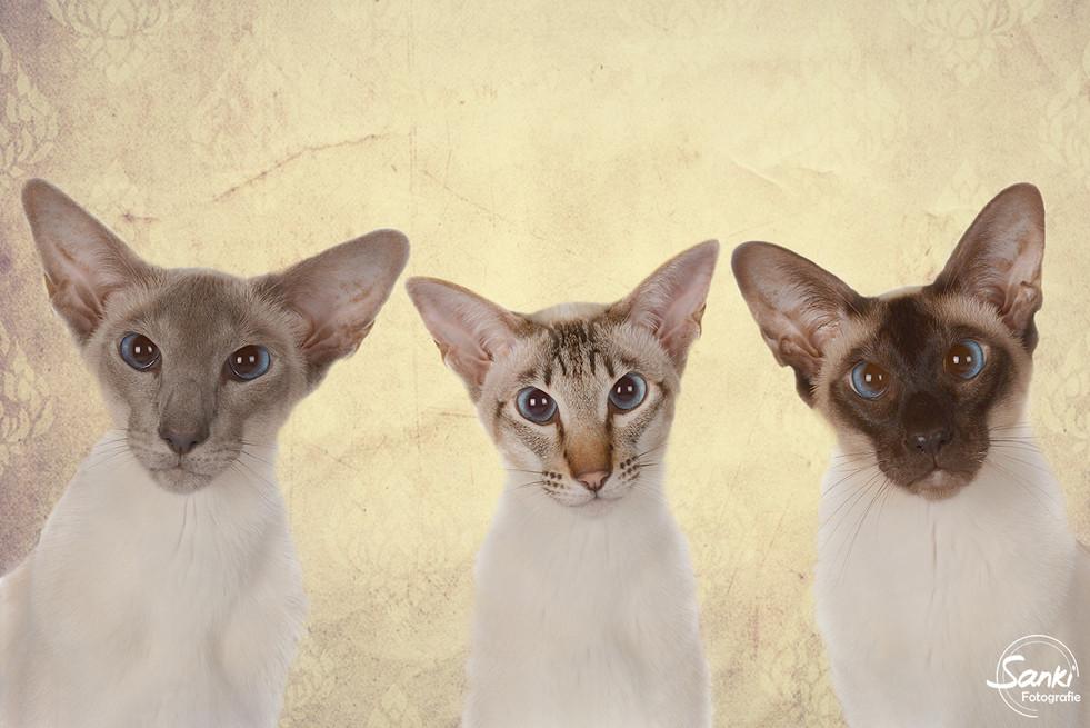 Rox, Rani & Rizzy