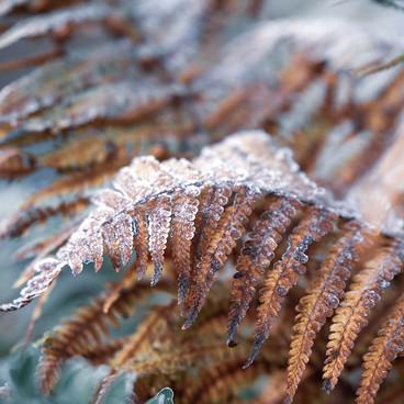 Varens in de winter