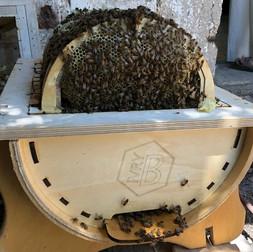 ליאת רודה בשדות הדבש, או שדות הדבש פור אבר