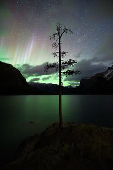 Minnewanka Tree Aurora.jpg