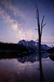 Peyto Milky Tree.jpg