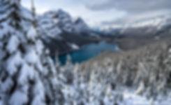 Peyto Snow3.jpg