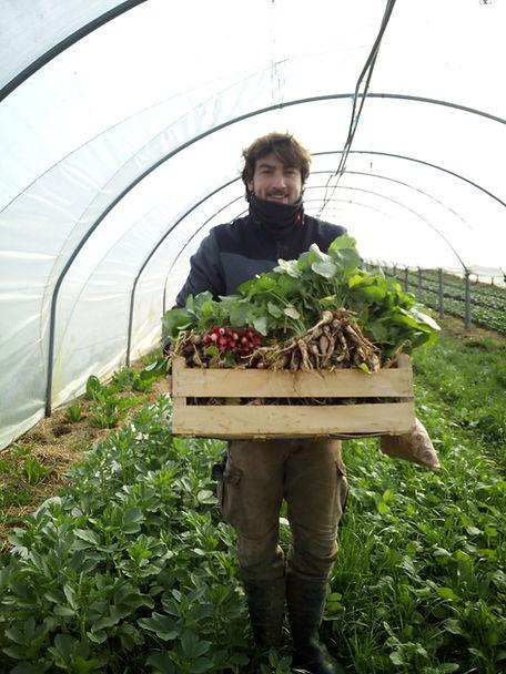Récoltes de radis à la main