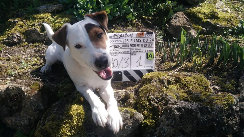 Canicoaching_cinéma_chien.jpg