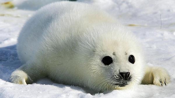 seal-pup2.jpg