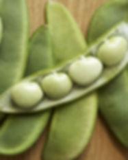 lima bean 3.jpg