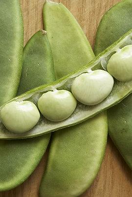 Baby Lima Beans - Bushel of Shelled Beans