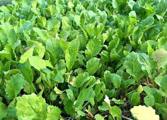 Turnip Salad Greens Bag