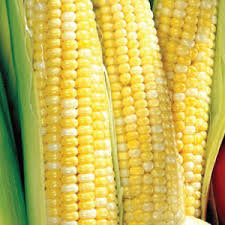 Ambrosia Corn - Shucked sold by Bag
