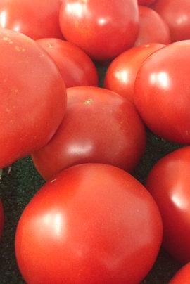 Greenhouse or Field Tomatoes - Bushel Grade A