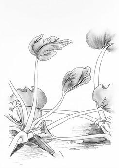 Booklet Spread 2 Illustration